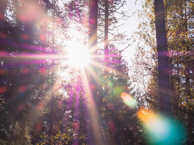 Zelfi, lo spiritello della foresta: anno tre